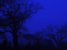 Árvores assustadores Fotografia de Stock