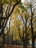 Árvores assustadores Foto de Stock Royalty Free