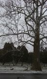 Árvores assustadores Fotos de Stock Royalty Free