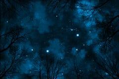Árvores assustadores da calha da opinião de baixo ângulo ao céu noturno estrelado com nebulosa azul Imagem de Stock Royalty Free