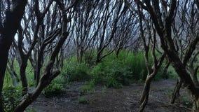Árvores assustadores na região selvagem da floresta vídeos de arquivo