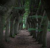Árvores assustadores perto de Zwolle Imagens de Stock Royalty Free