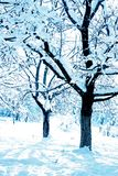 Árvores azuis do inverno fotografia de stock