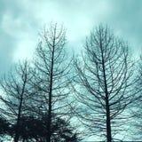 Árvores azuis tormentosos Imagem de Stock Royalty Free