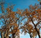 Árvores bonitas fotos de stock