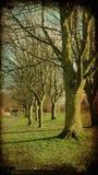 Árvores bonitas Imagens de Stock Royalty Free
