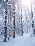 Árvores bonitas cobertas com a geada no parque com raios de sol Cenário do inverno imagens de stock royalty free