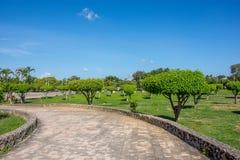 Árvores bonitas com as coroas verdes redondas e uma estrada de passagem próxima feita da pedra, contra um céu azul Fotos de Stock Royalty Free
