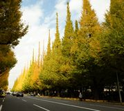 Árvores bonitas da nogueira-do-Japão contra o céu azul no outono em Meiji Jingu Gaien Park, Tóquio - cores do outono de JapanThe  imagens de stock