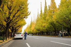 Árvores bonitas da nogueira-do-Japão contra o céu azul no outono em Meiji Jingu Gaien Park, Tóquio - cores do outono de JapanThe  foto de stock