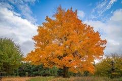 Árvores bonitas da queda fotografia de stock royalty free