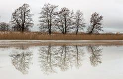 Árvores bonitas do inverno que refletem no rio Paisagem rural Imagem de Stock Royalty Free