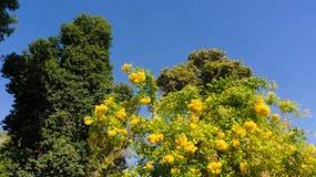 Árvores bonitas e raras dentro fotos de stock royalty free