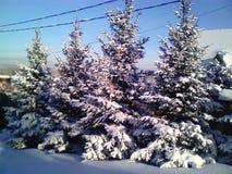 Árvores bonitas em um dia de inverno ensolarado foto de stock royalty free