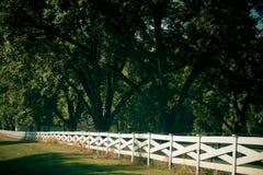 Árvores bonitas em uma estrada secundária Imagens de Stock