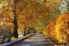 Árvores bonitas na rua da cidade, estação do outono fotografia de stock