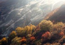 Árvores bonitas no montanhês contra montanhas Foto de Stock