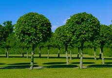 Árvores bonitas verdes do palácio Imagem de Stock Royalty Free