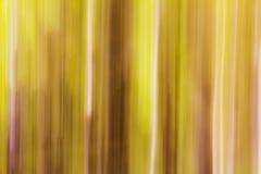 árvores borradas Imagens de Stock
