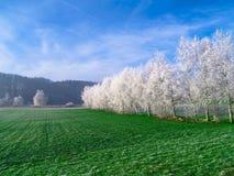 Árvores brancas Fotografia de Stock Royalty Free