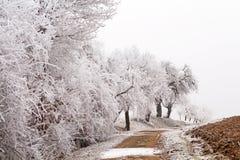 Árvores brancas em uma pista do país Fotos de Stock