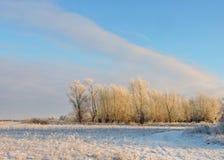 Árvores brancas no campo do inverno, Lituânia Fotos de Stock Royalty Free