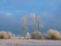 Árvores brancas no campo do inverno, Lituânia Imagens de Stock Royalty Free