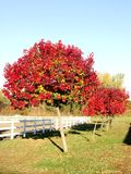 Árvores brilhantes Imagens de Stock Royalty Free