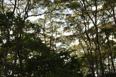 Árvores céu, folhas, dia, luz solar, floresta Imagem de Stock