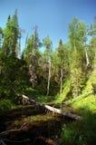 Árvores caídas Imagens de Stock Royalty Free