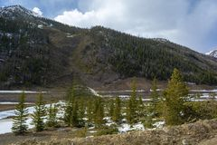 Árvores caídas e as sobras de uma avalancha da montanha imagens de stock