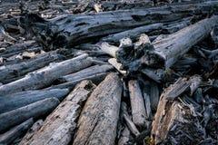 Árvores caídas inoperantes em Washington State Fotografia de Stock