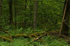 Árvores caídas na selva fotos de stock