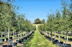 Árvores carregadas Fotos de Stock