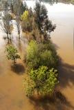 Árvores cercadas pela água Fotos de Stock