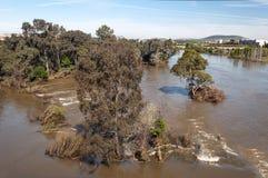 Árvores cercadas pela água Imagem de Stock Royalty Free