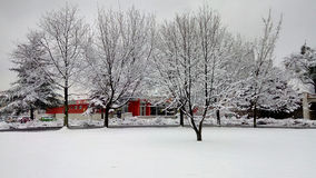Árvores cercadas pela neve Imagem de Stock Royalty Free
