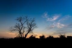 Árvores claras da silhueta Foto de Stock