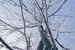 Árvores cobertas com a geada Imagens de Stock Royalty Free