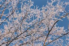 Árvores cobertas com a geada Fotografia de Stock Royalty Free