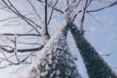 Árvores cobertas com a geada Foto de Stock Royalty Free