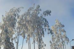 Árvores cobertas com a geada imagens de stock