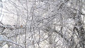 Árvores cobertas com a geada filme