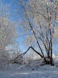 Árvores cobertas com a neve Fotos de Stock Royalty Free