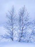 Árvores cobertas com a neve Imagem de Stock