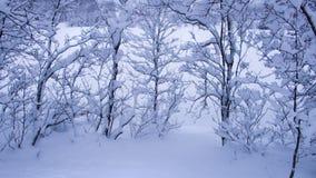 Árvores cobertas com a neve Fotografia de Stock