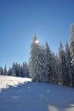 Árvores cobertas com a neve Fotografia de Stock Royalty Free
