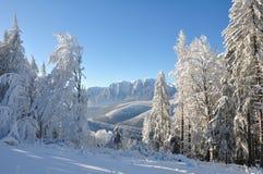 Árvores cobertas com a neve do Natal Foto de Stock Royalty Free