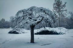 Árvores cobertas com a neve no parque imagens de stock royalty free