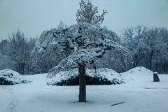 Árvores cobertas com a neve no parque fotografia de stock
